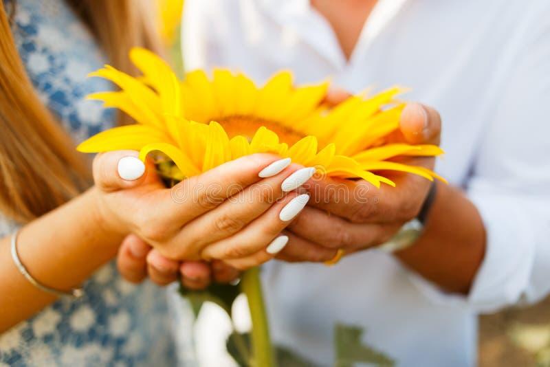 Paar in liefde op het gebied van romantische zonnebloemen royalty-vrije stock foto