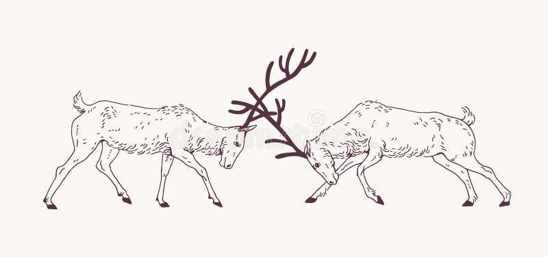 Paar mannelijke deers die die met geweitakken tijdens de van de het fokkenseizoen of sleur hand vechten met contourlijnen op lich vector illustratie