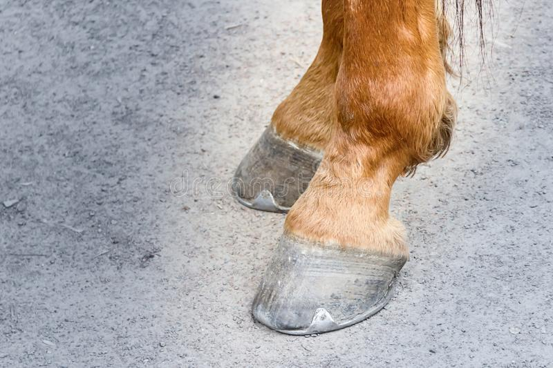 Paar paard hoofs bruine ras het rennen hoeven van ijzersporten op een grijs oppervlakte stoffig close-up van achterste benen met  royalty-vrije stock fotografie