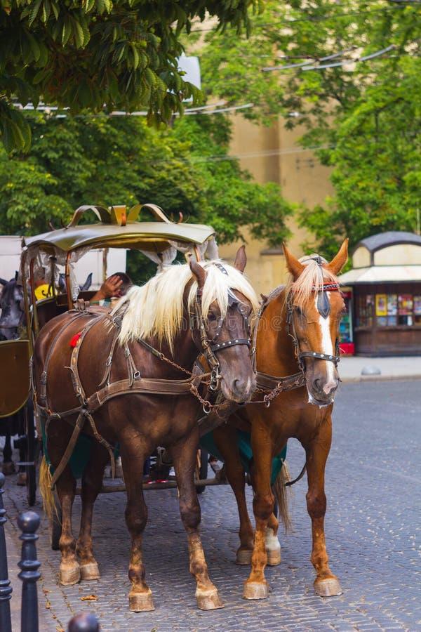Paar paarden aan vervoer op stadsstraat die wordt uitgerust stock afbeelding