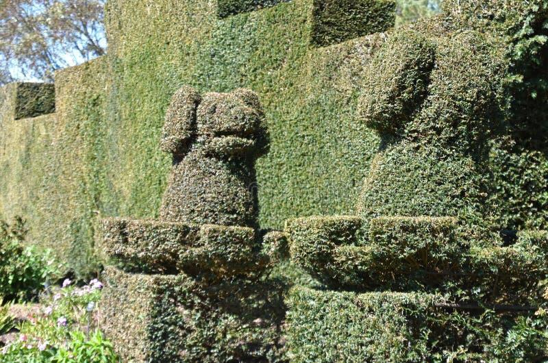 paar Topiary Honden royalty-vrije stock foto