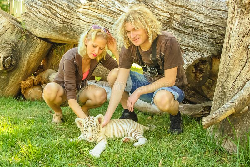 Paar touchs witte tijger royalty-vrije stock afbeelding
