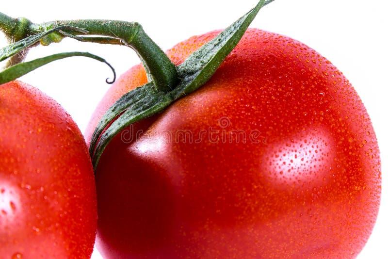 Paar Twee Tomaten Verbonden Stammen Verse Groenten die Ing koken stock afbeelding