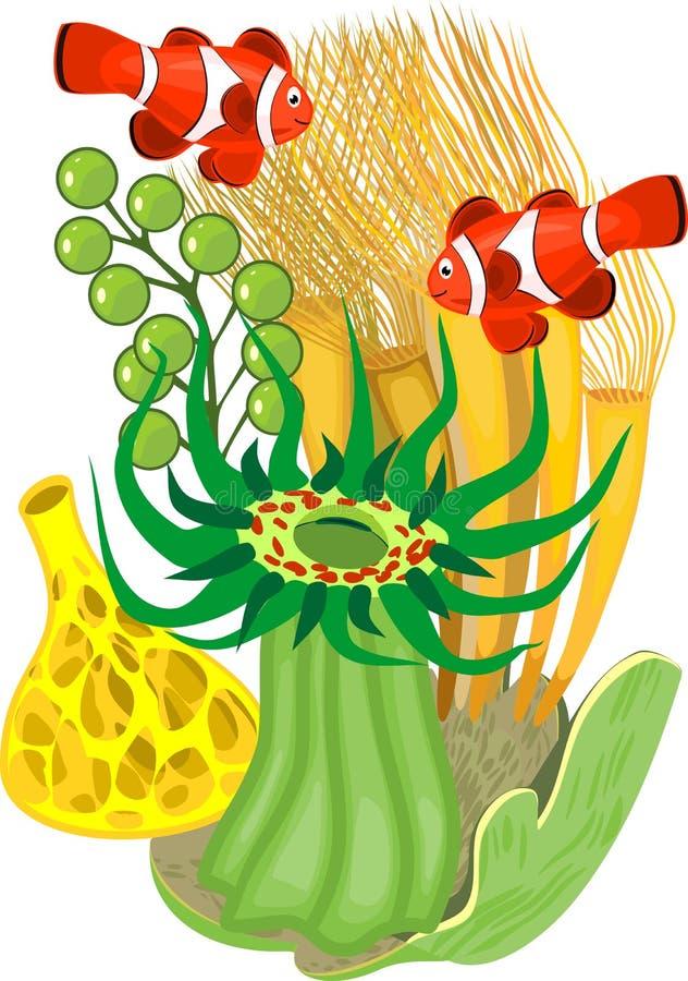 Paar van clownfish en groene snakelockanemoon royalty-vrije illustratie