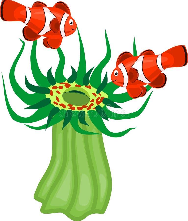 Paar van clownfish en groene snakelockanemoon stock illustratie