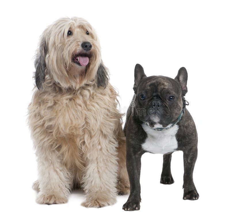 Paar van een Hond van het mengen-Ras en een Franse buldog ( stock afbeelding