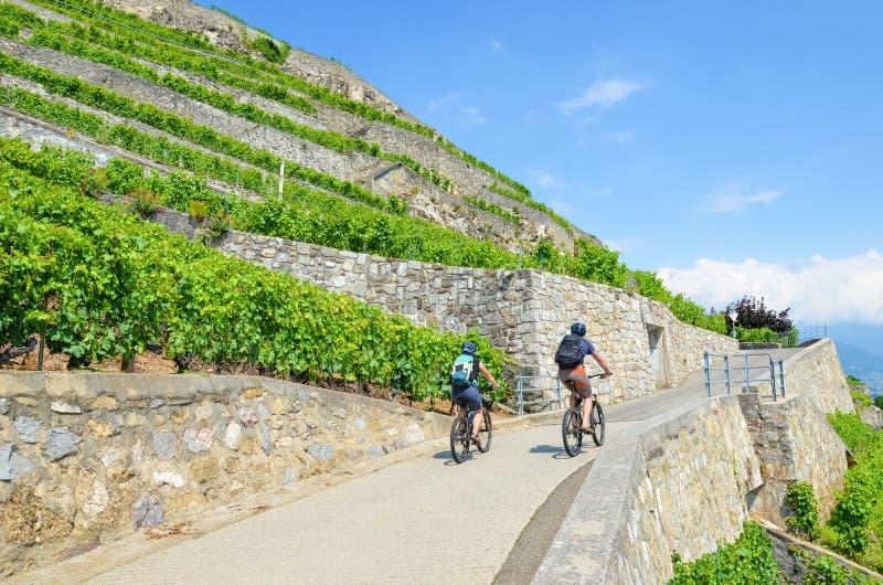 Paar van fietsers op weg langs mooie terrasvormige wijngaarden op de hellingen naast het Meer van Genève, Zwitserland Beroemd mee royalty-vrije stock foto's