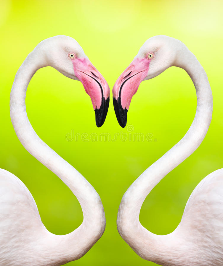 Paar van flamingo's royalty-vrije stock foto