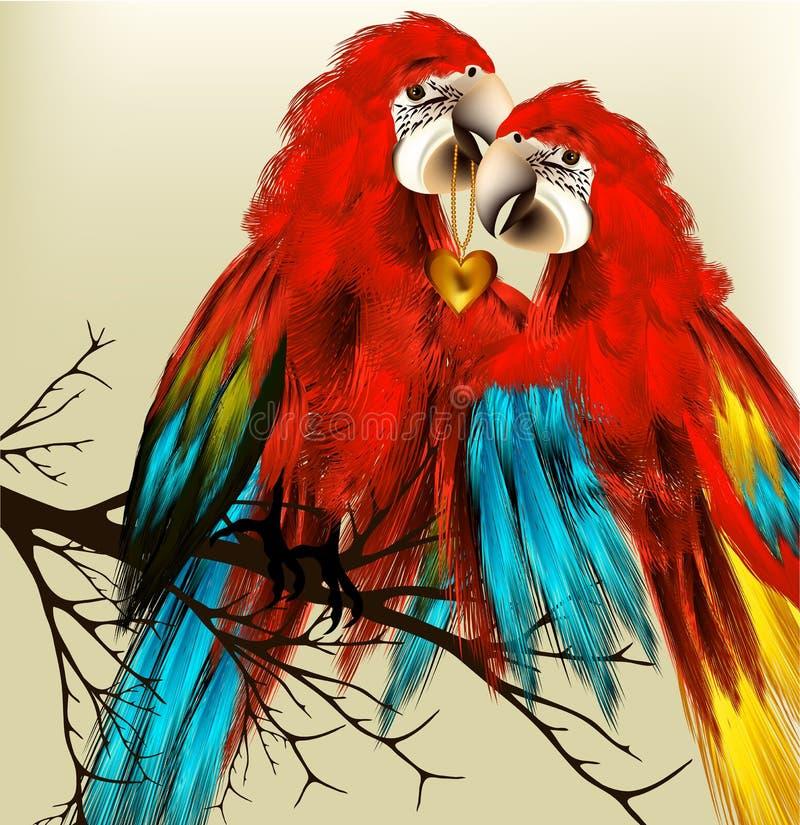 Het leuke paar van kleurrijke vector realistische aronskelkenpapegaaien zit op zemelen royalty-vrije illustratie