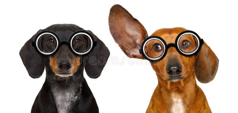 Paar van stomme nerd dwaze tekkels royalty-vrije stock afbeelding
