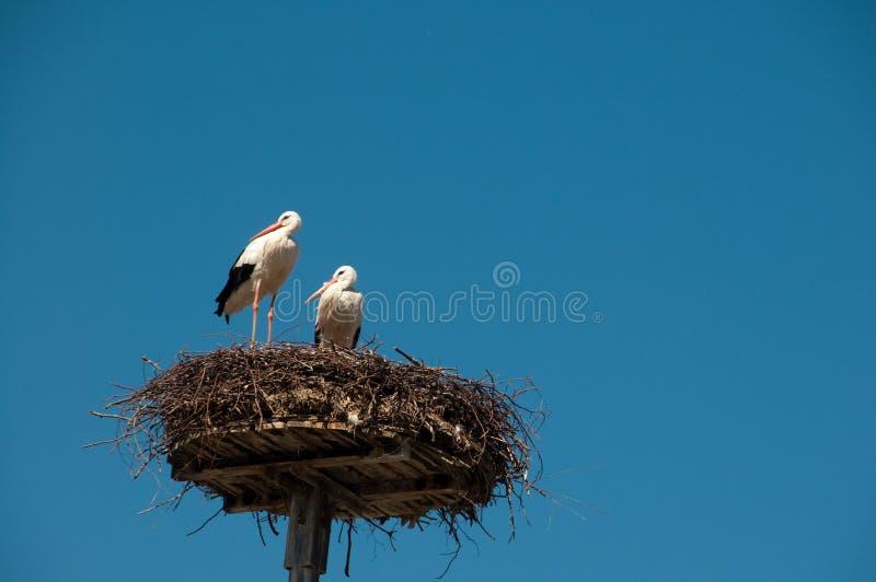Paar van storck op nest royalty-vrije stock foto