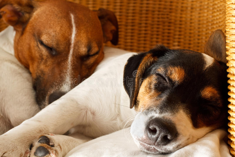 Paar van twee honden in liefde stock foto