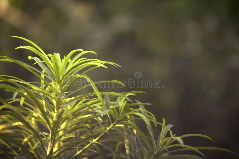 Paar von Blättern mit Seiteninteraktion der Sonne strahlt aus stockfoto