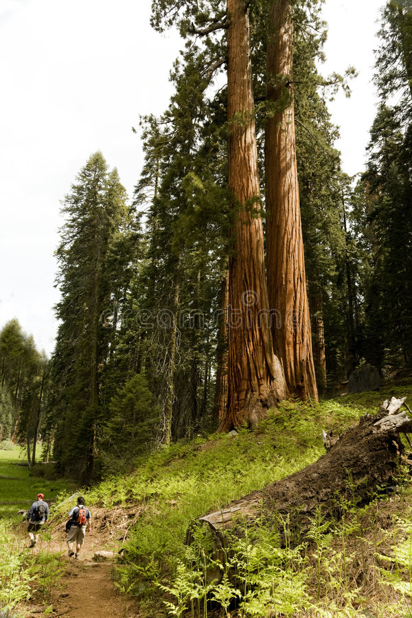 Paar Wandelaars in het Nationale Park van de Sequoia stock afbeelding