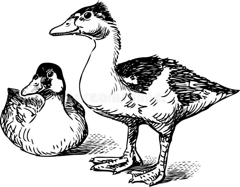 Paar wilde eenden vector illustratie