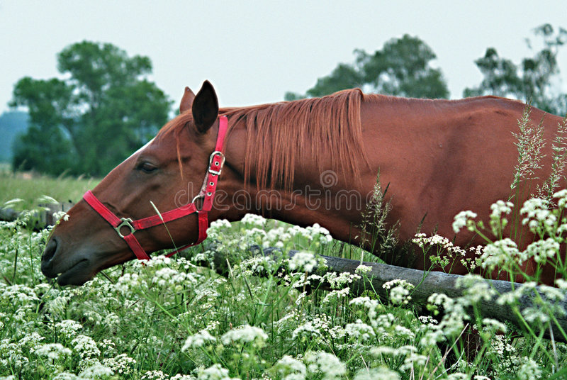 Paard 5 royalty-vrije stock foto's
