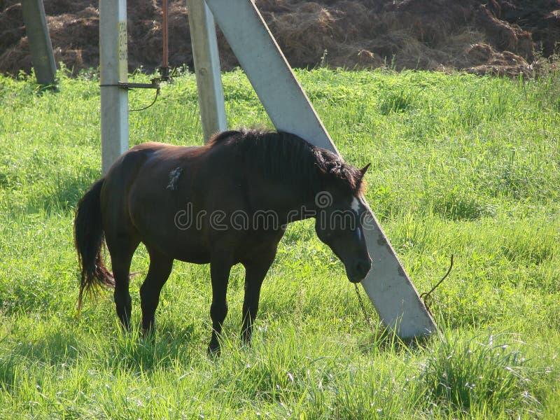 Paard aan een post wordt gebonden die royalty-vrije stock foto's