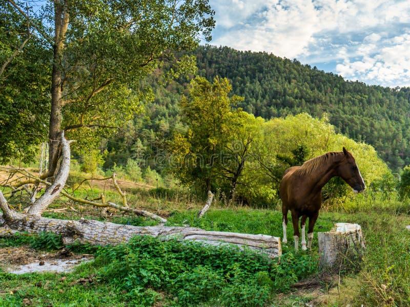Paard in aard royalty-vrije stock fotografie