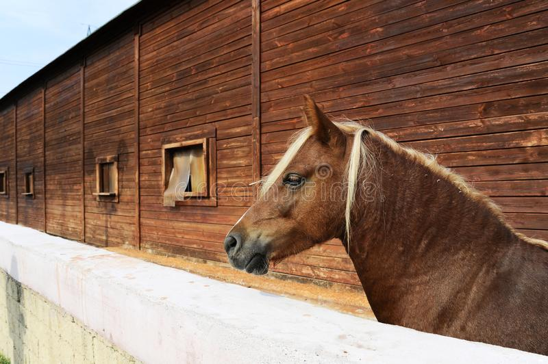 Paard in bijlage Mooi bruin paard die zich in grote ruime bijlage dichtbij de stal in het landbouwbedrijf bevinden royalty-vrije stock foto's
