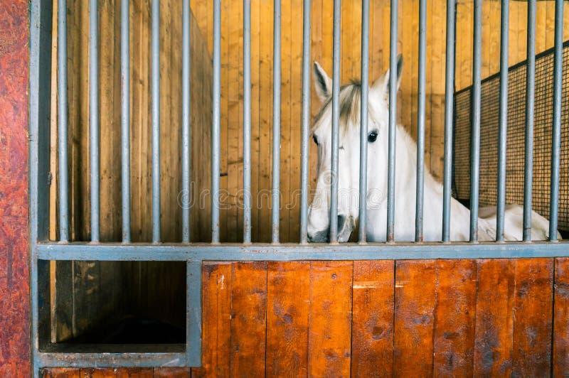 Paard binnen box royalty-vrije stock foto