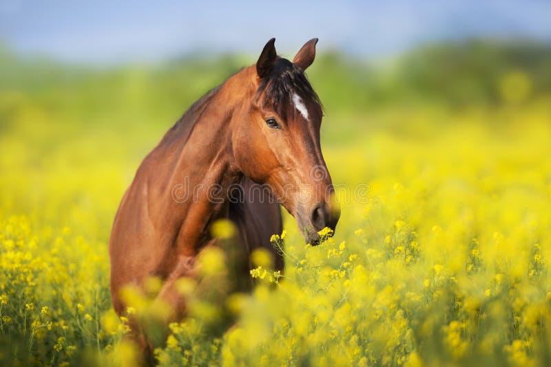 Paard in bloemen royalty-vrije stock fotografie