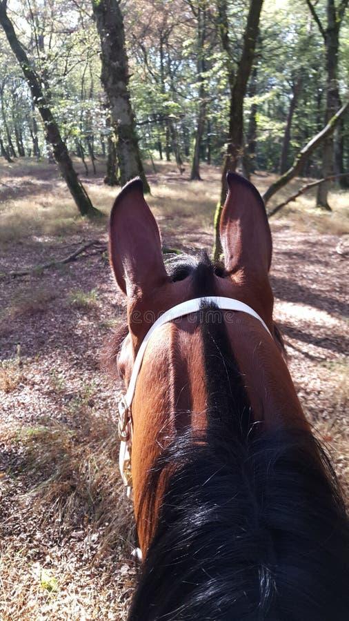 Paard in bos stock foto