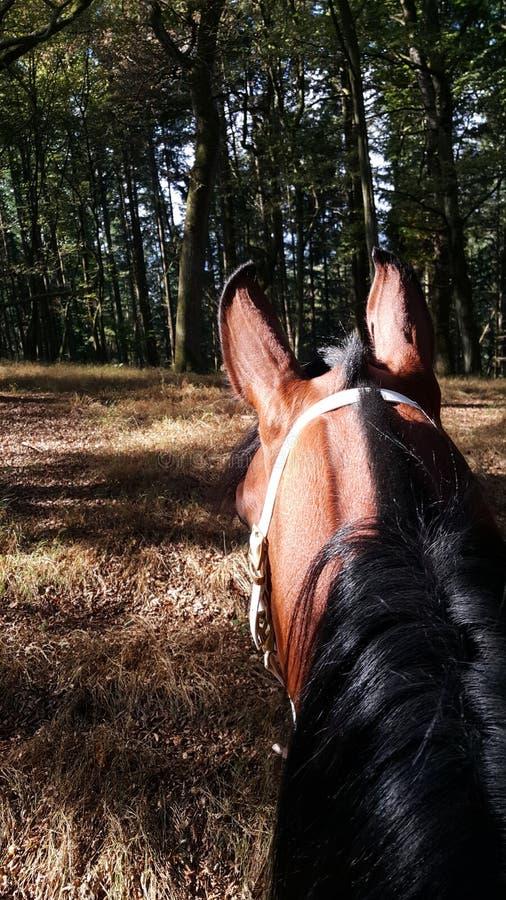 Paard in bos royalty-vrije stock fotografie