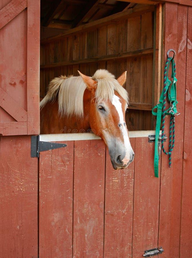 Paard in Box stock afbeelding