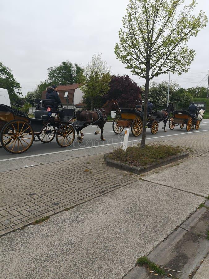 Paard Brugge stock fotografie