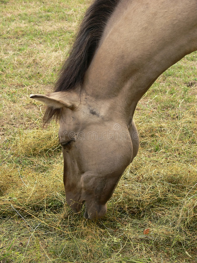 Paard In Close-up Royalty-vrije Stock Foto's