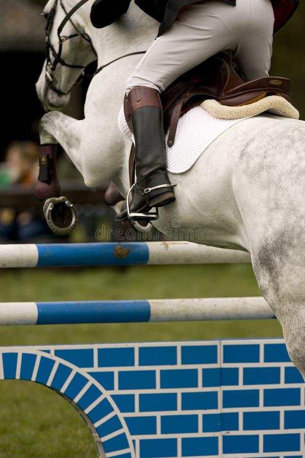 Paard dat 021 springt stock afbeelding