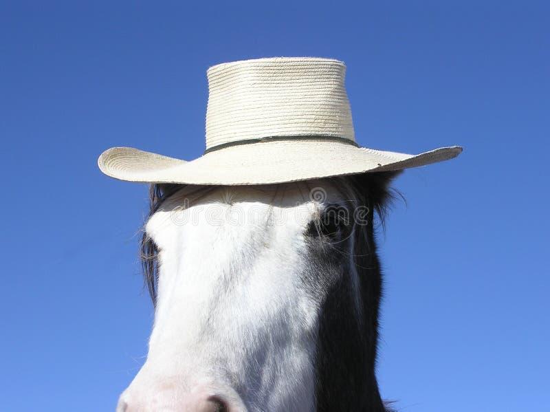 Paard dat een hoed draagt royalty-vrije stock foto's