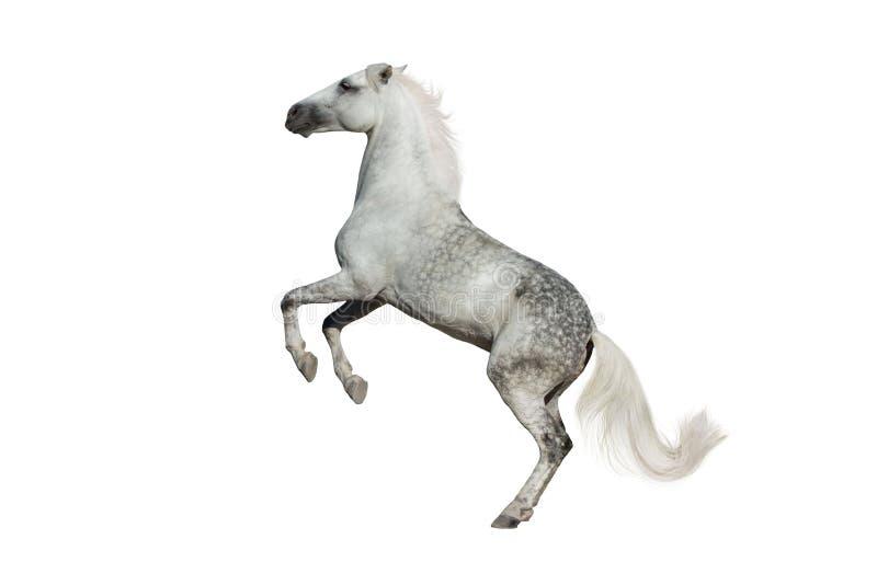 Paard dat omhoog grootbrengt royalty-vrije stock foto's