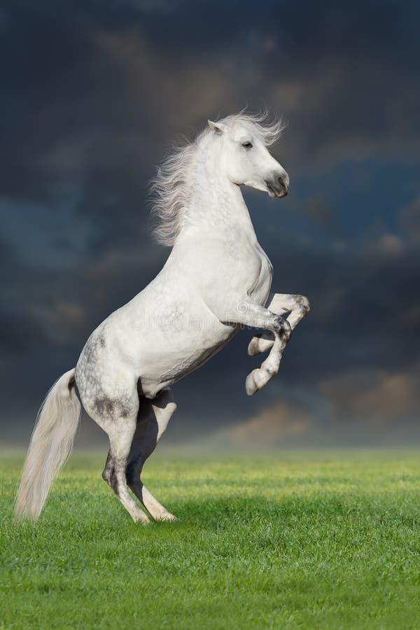 Paard dat omhoog grootbrengt stock foto