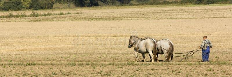 Paard dat op het gebied werkt royalty-vrije stock foto
