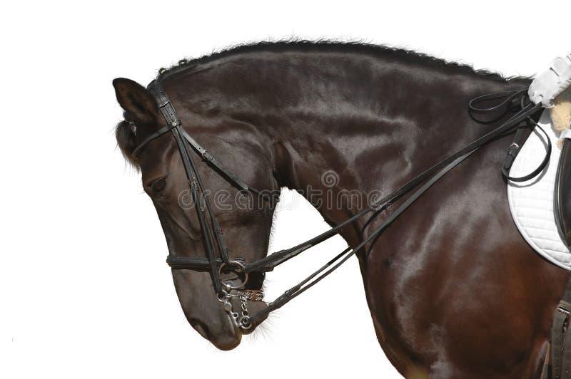 Paard Dat Op Wit Wordt Geïsoleerde Royalty-vrije Stock Afbeelding