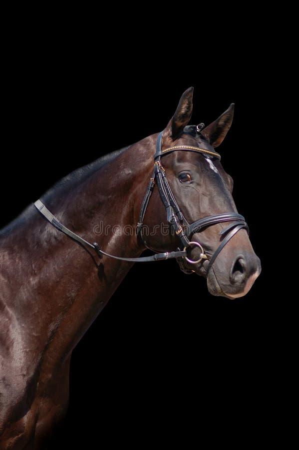 Paard dat op zwarte wordt geïsoleerd royalty-vrije stock fotografie