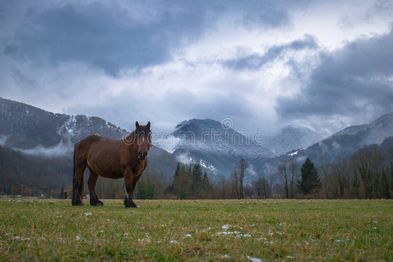 Paard in de aard royalty-vrije stock afbeeldingen