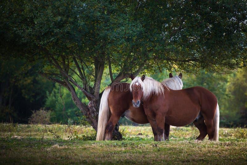 Paard in de aard royalty-vrije stock afbeelding