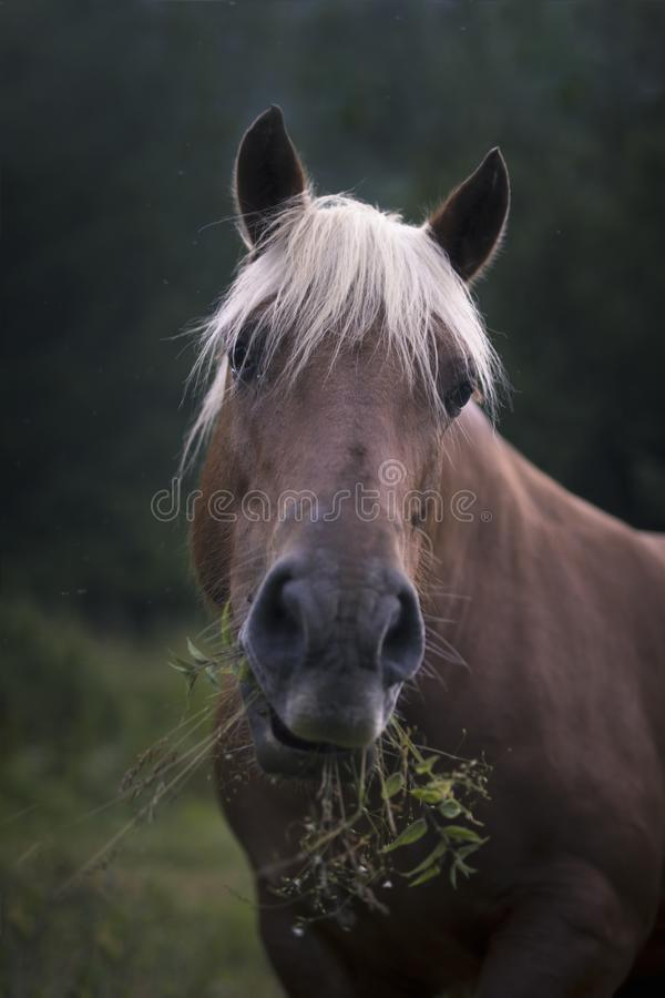 Paard in de aard stock afbeelding