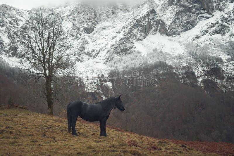 Paard in de aard royalty-vrije stock foto's