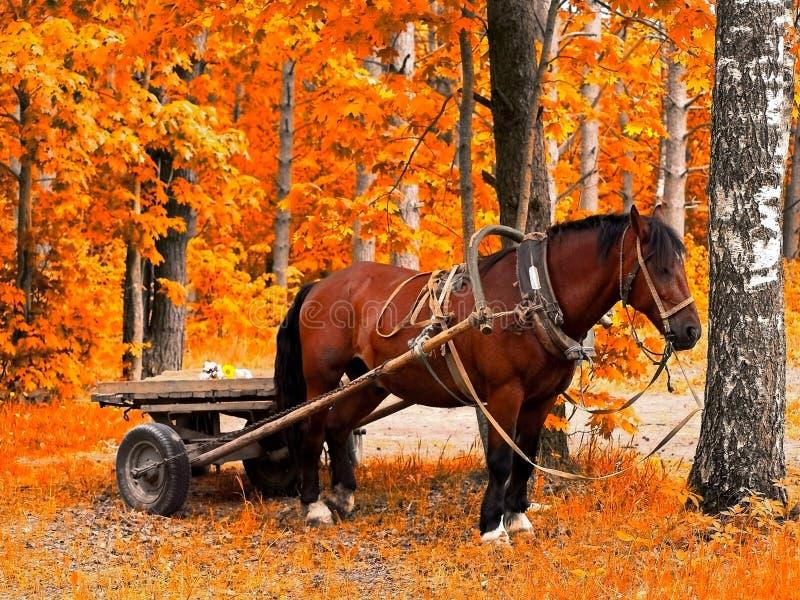 Paard in de gouden herfst royalty-vrije stock afbeeldingen