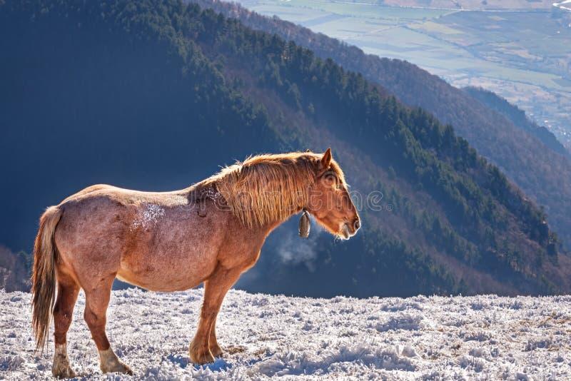 Paard in de koude winter stock foto's