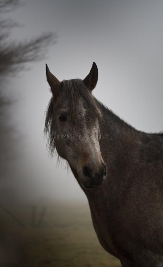 Paard in de mist stock foto's