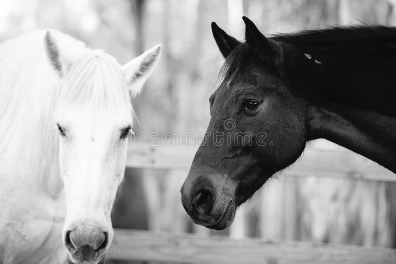 Paard in de paddock stock foto's