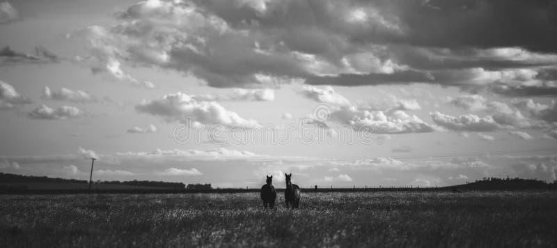 Paard in de paddock stock afbeelding