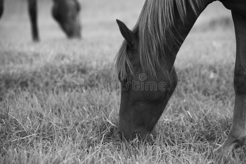 Paard in de paddock stock foto's