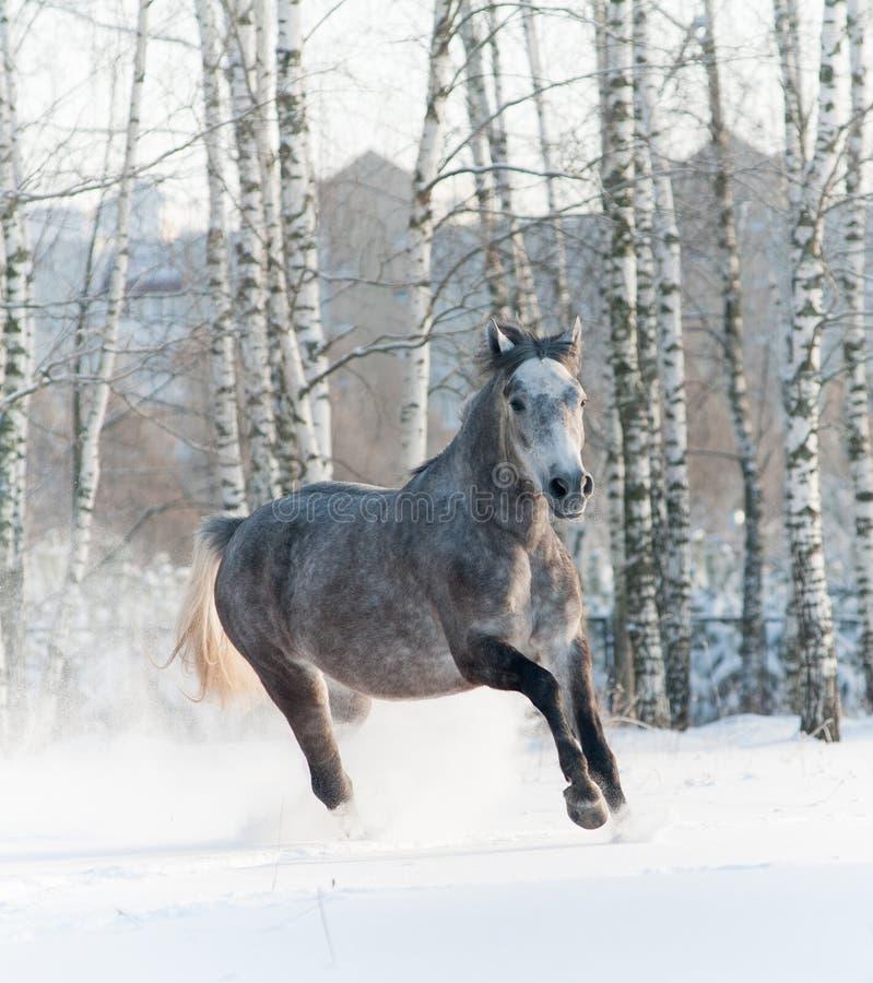 Paard in de winter stock afbeelding
