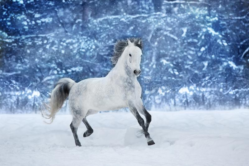 Paard in de winter in werking die wordt gesteld die royalty-vrije stock afbeeldingen