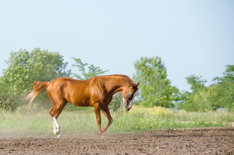 Paard in de zomer stock foto's